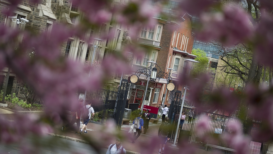 Temple's gate on Polett Walk through cherry tree blossoms.