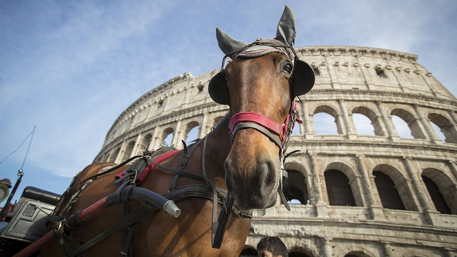 A horse in front of the Colosseum in Rome, Italy.