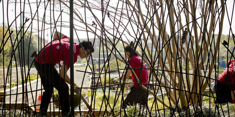 students tending an urban garden