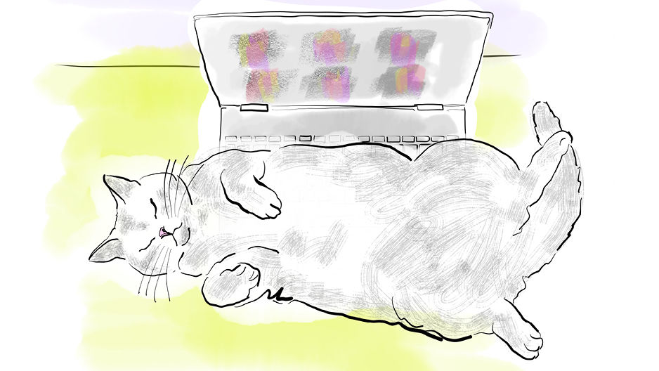 cat sleeping on a laptop