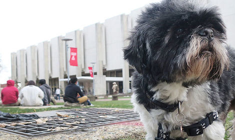 Mookie on campus