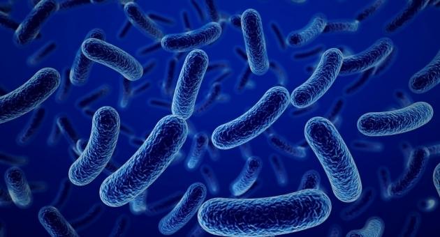 kokken bacterie longen