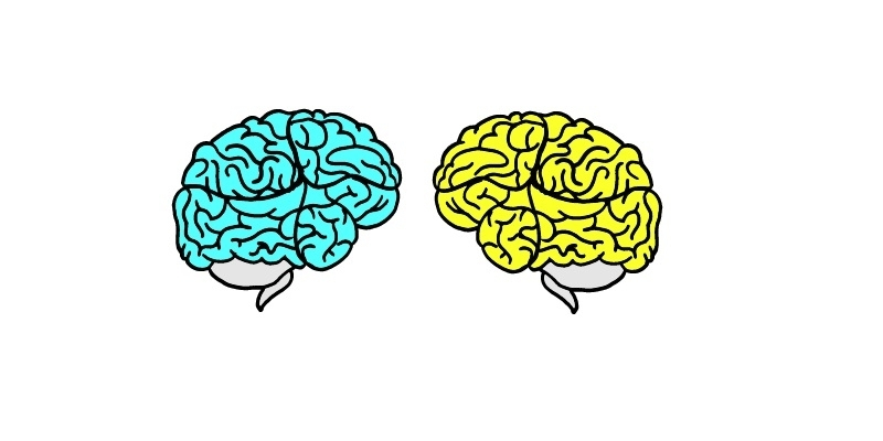 Two illustrated brains looking at each other.