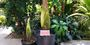 One large and one small corpse flower prepare to bloom.