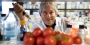 Antonio Giordano holding a pipette, surrounded by tomatoes in a lab