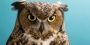 Stella, the owl that serves as Temple's mascot