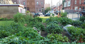 Temple Community Garden
