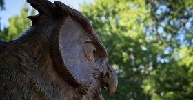 Owl statue on Main Campus.